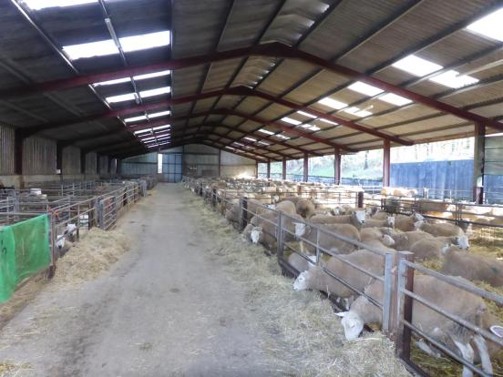 PRINCIPAL SHEEP SHED