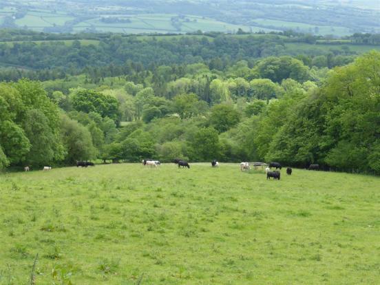 Cwmceiliof Fawr land