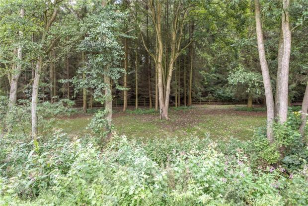 Woodland To Rear