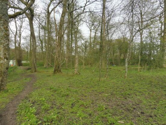 Woodland/Paddock