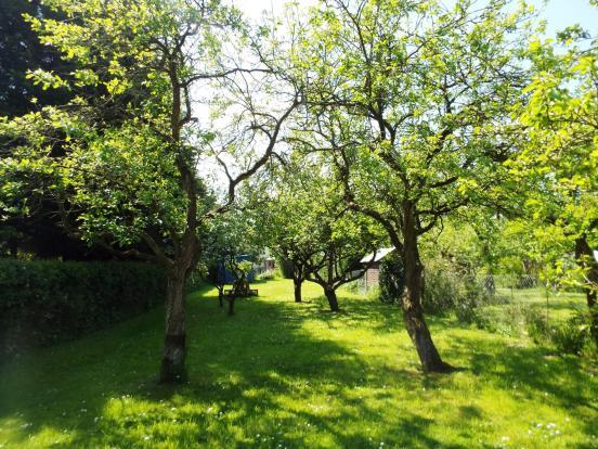 Garden- Orchard area