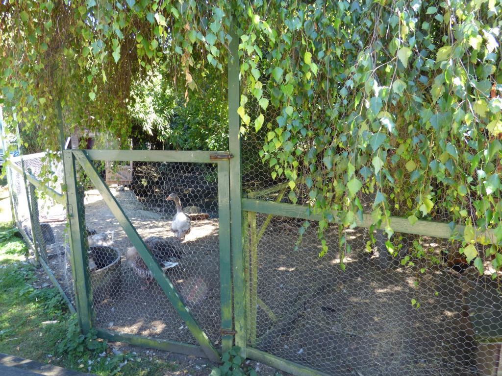 Goose enclosure