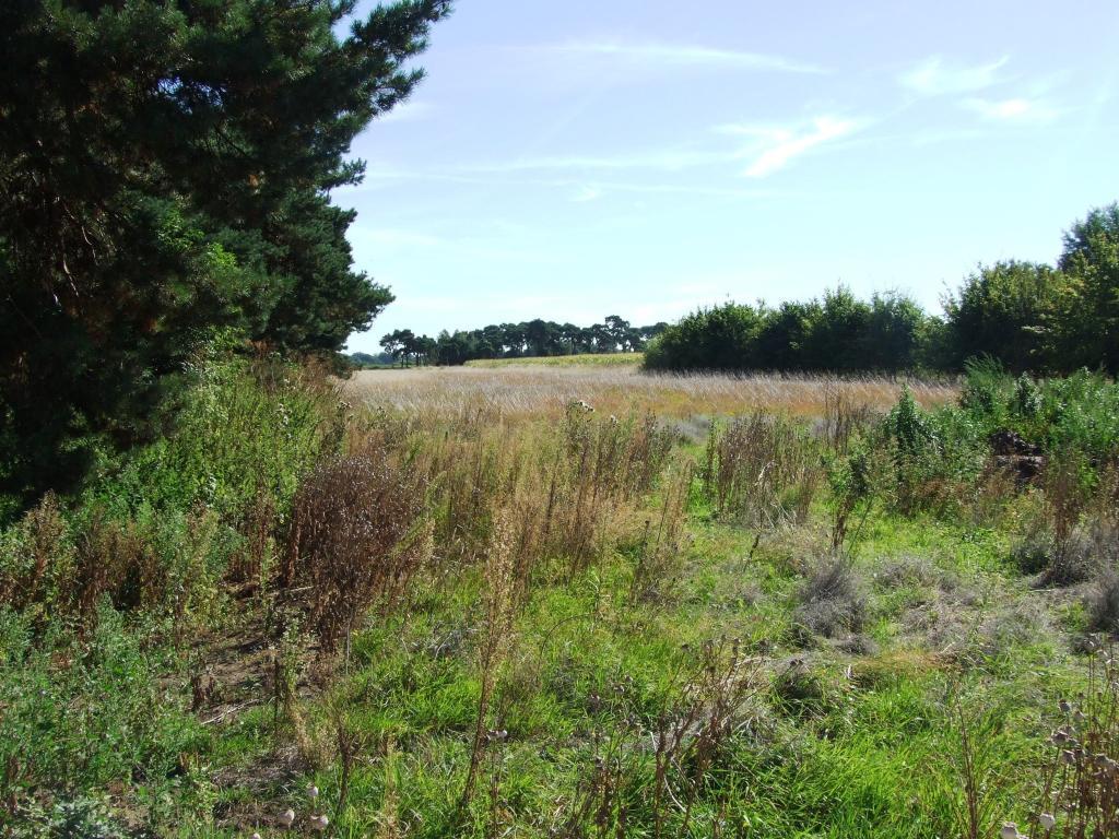 Land View Behind Hou