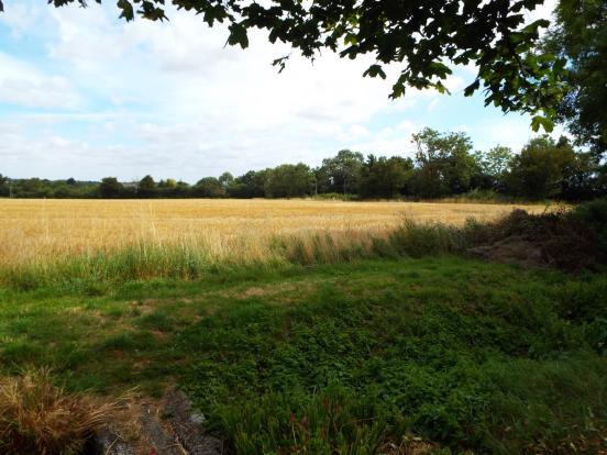 Fields adjacent gard