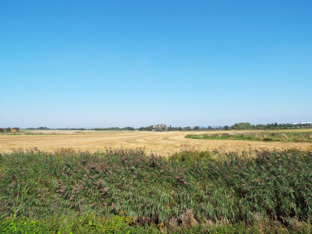 Pagham Nature Reserv