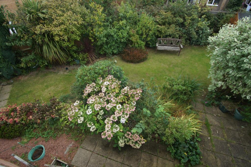 Rear Views of Garden