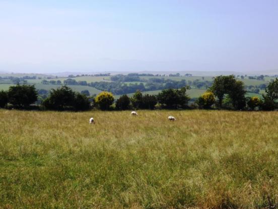 Land/View