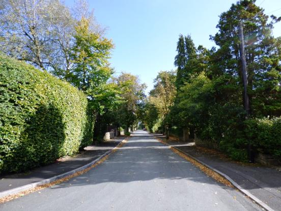 Hilton Road Tree Lin
