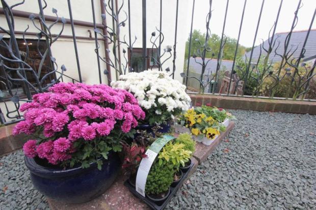 Rear Garden Five