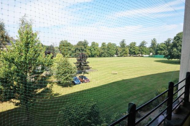 Cricket Pitch ...