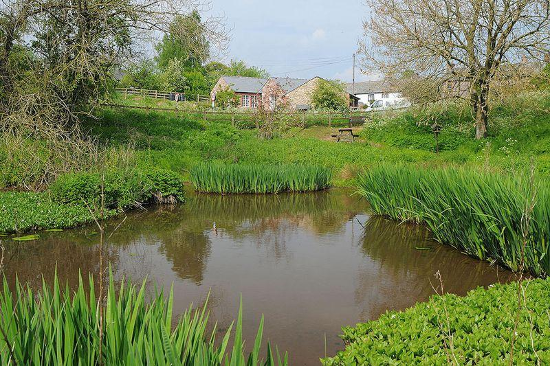 Village pond