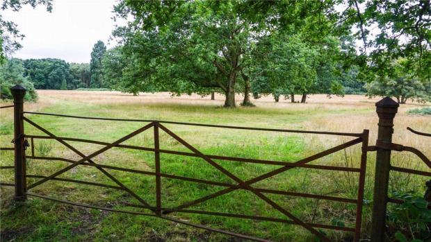 Local Woodlands