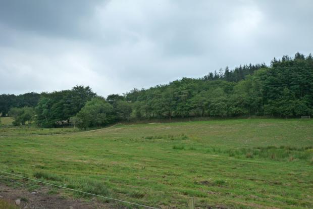 Paddock view 4