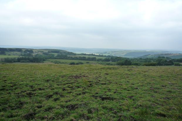 Paddock Views