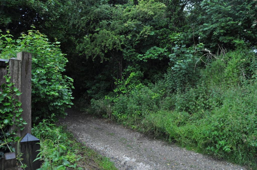 DSC_2301 Lane.jpg