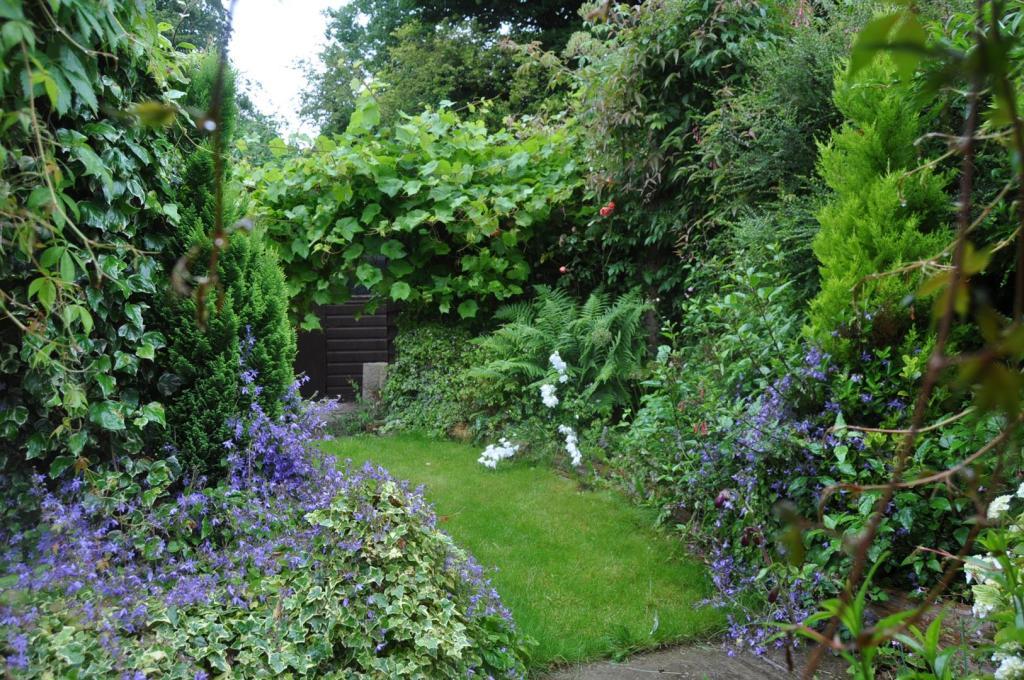 DSC_2310 Garden.jpg