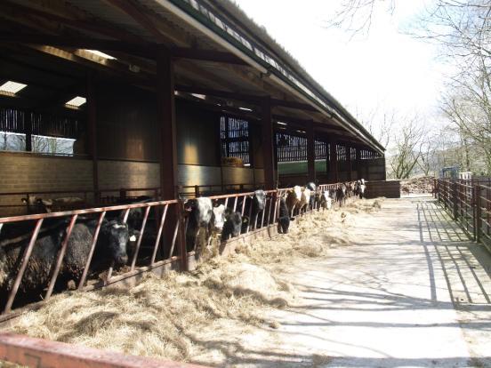 Cattle fold