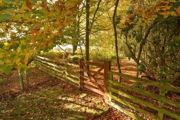 Gate/ Garden