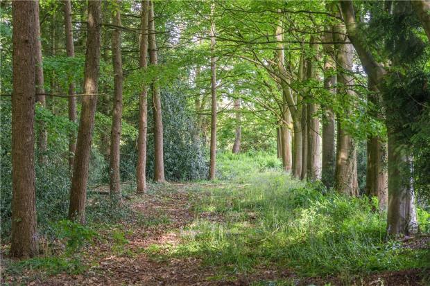 Bath - Woodland