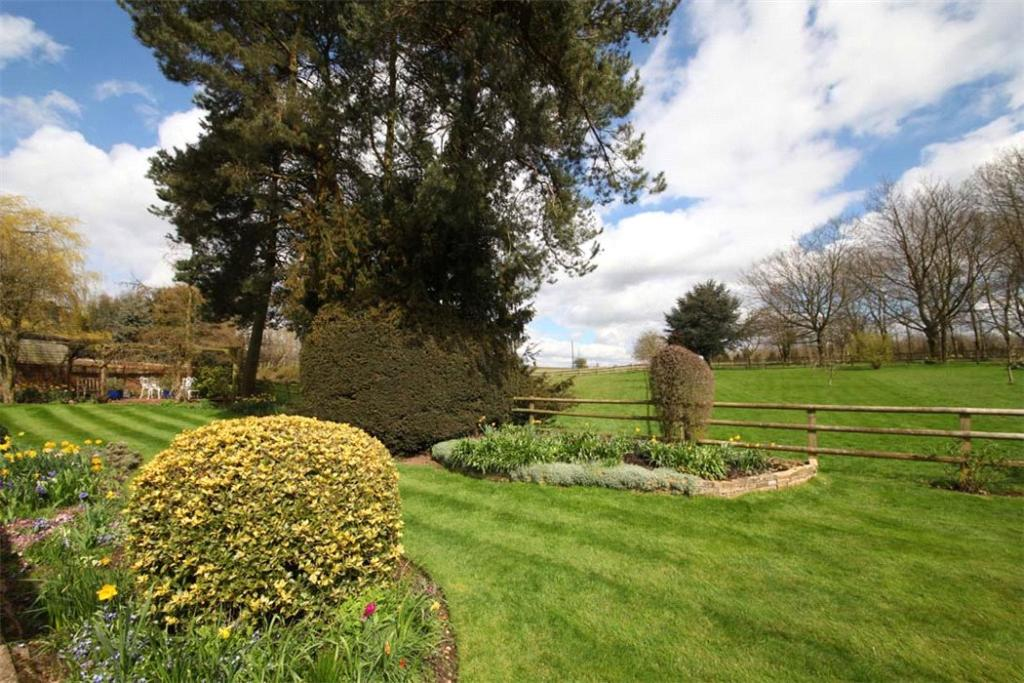 Woodrow: Garden