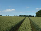 17.8 Acres Farm Land for sale