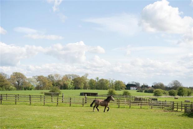 Sadberge: Equestrian