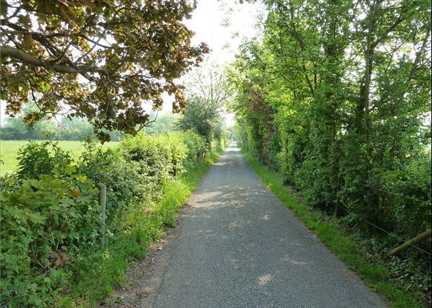 Magna Carta Lane