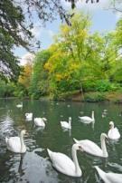 Wycombe`s River Wye