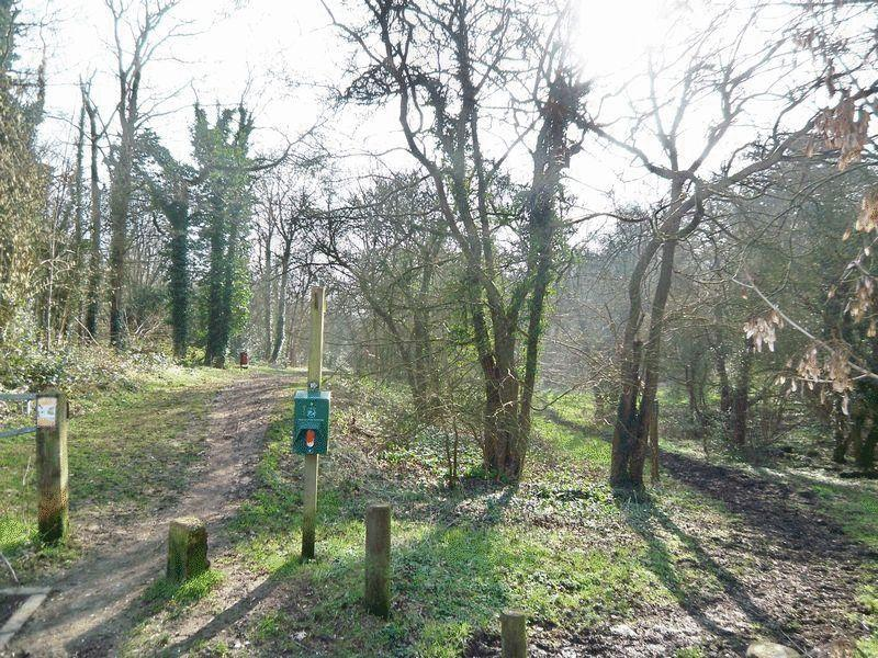 Rydon's Wood