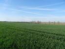 Bolnhurst Farm Land for sale