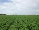 Land at Kirton End Farm Land for sale