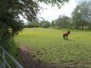 Palace Yard Farm Farm Land for sale