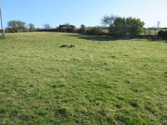 Field/Paddock