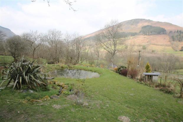 Natural Pond