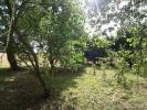Orchard & Rea...