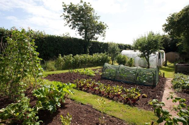 veg plot 2