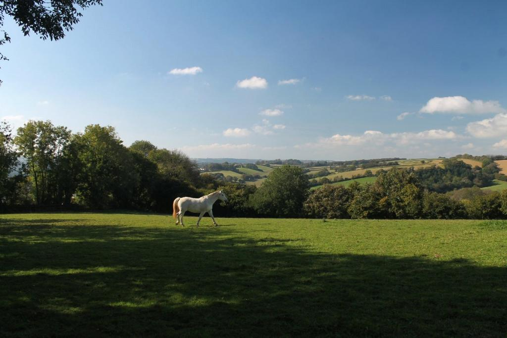 paddock and view