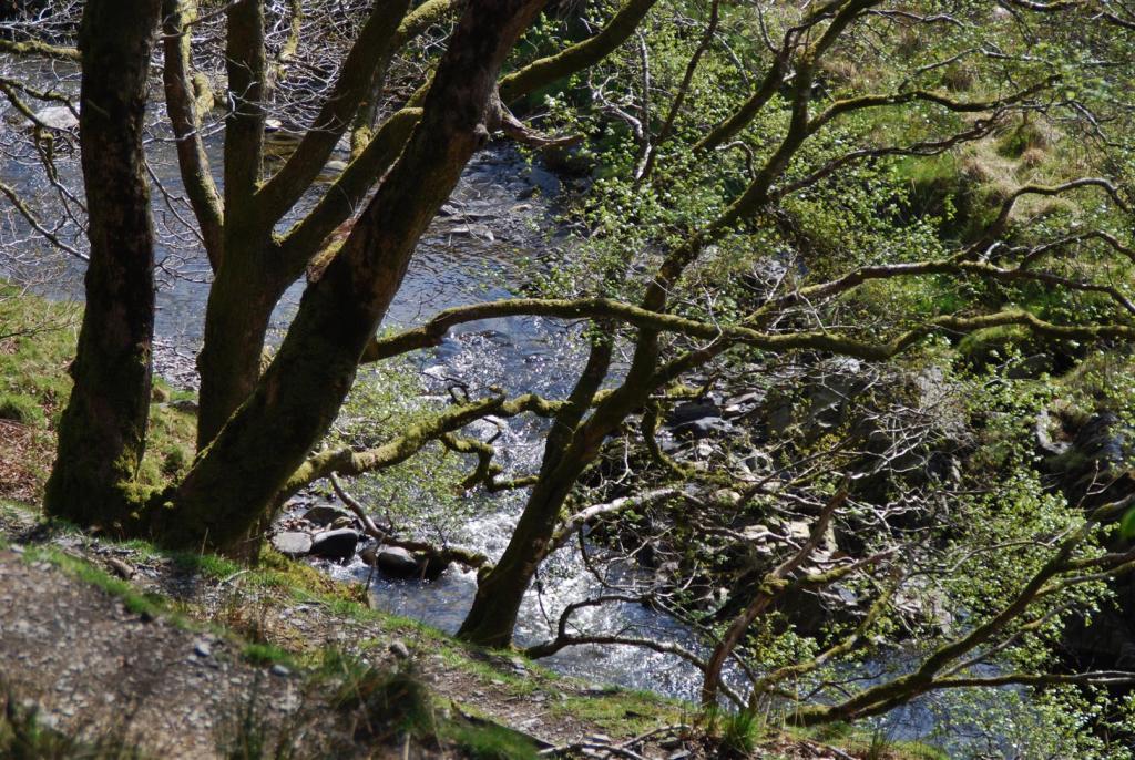 Glynderi - river vie