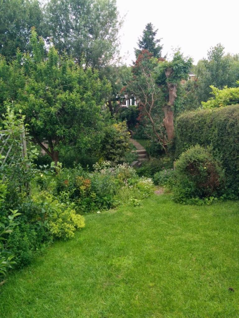 Rear garden (summer)