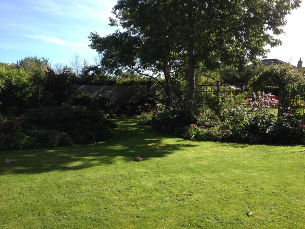 South facing garden