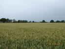 Farm Land in Bransley for sale