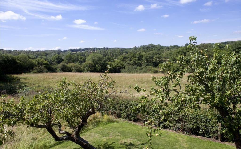 Orchard and Views