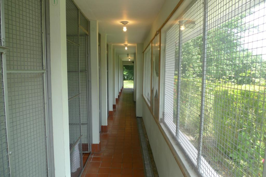 cattery/kennels