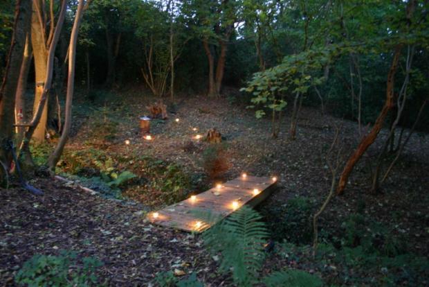 Woodland by Night 2