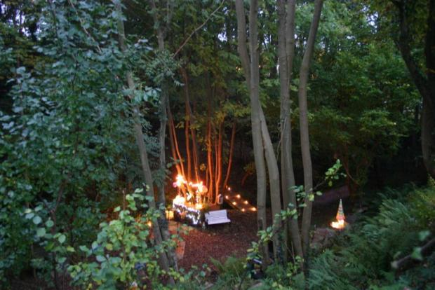 Woodland by Night 3