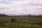 Land in Rowanlea...