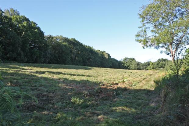 Field View