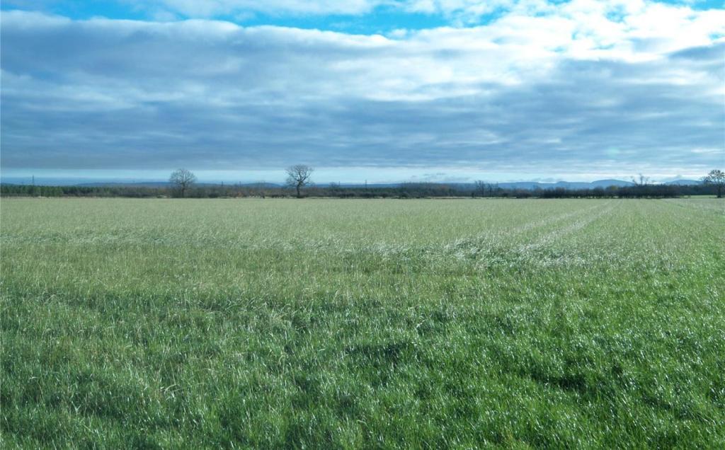 Grass Lot 2