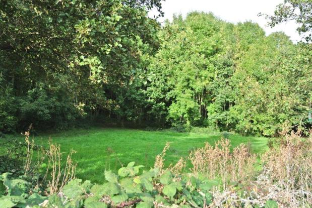 The woodland behind