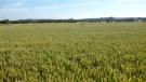 Farm Land in Cottesmore Road, Ashwell...